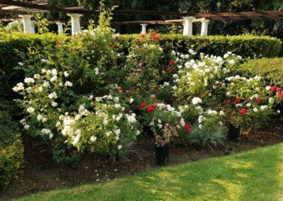 Garden service Johannesburg