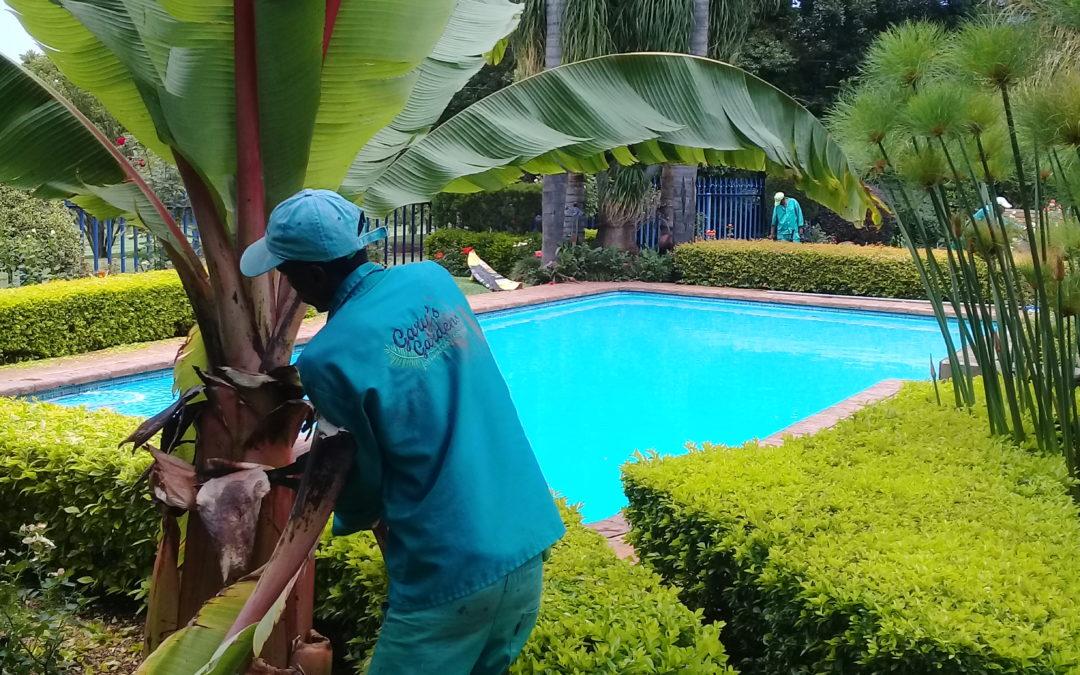 The Convenience Of A Modern Garden Service Provider